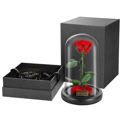 """DeFaith Beauty and the Beast Rose, 9"""" x 6"""" Preserved Real Fresh Rose in Glass,"""