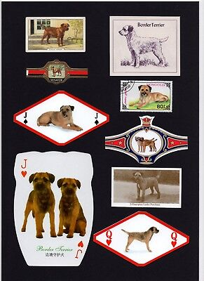 Border Terrier Mounted Set Vintage Dog Collectable Cards Stamps And Bands