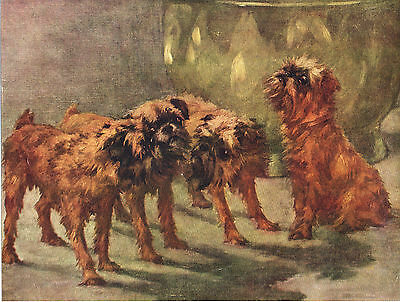 Brussels Griffon Group Original Dog Colour Art Print Page From 1934 By Maud Earl