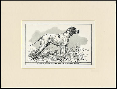 Pointer Rare Antique 1900 Engraving Named Dog Print Ready Mounted