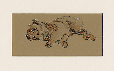 Sleeping Chow Chow Puppy Charming 1930'S Cecil Aldin Dog Art Print Ready Mounted