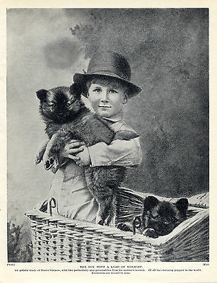 Keeshond Puppies And Small Boy Charming Old Original Dog Print From 1934