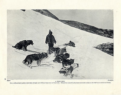 Eskimo Sled Dog Team On A Trail In The Mountains In Labrador Old 1934 Dog Print