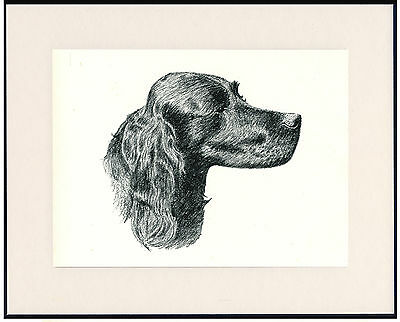 Gordon Setter Old Dog Head Study Print From 1935 Mounted Ready To Frame