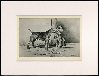WELSH TERRIER RARE 1894 ANTIQUE DOG PRINT by ARTHUR WARDLE READY MOUNTED