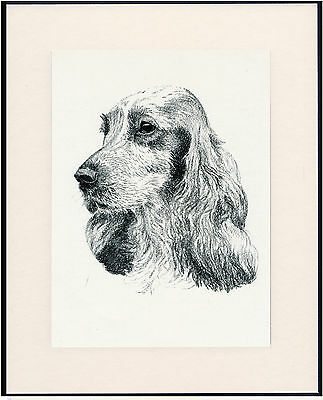 Cocker Spaniel Old Dog Head Study Print From 1935 Mounted Ready To Frame