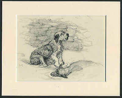 Old English Sheepdog Finds Sheep In Snow 1940'S Vernon Stokes Dog Print Mounted