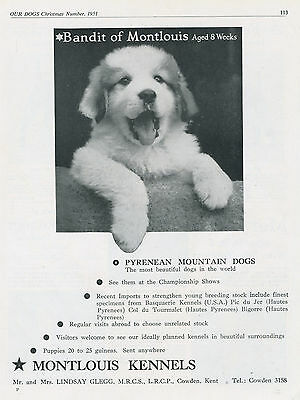 Pyrenean Mountain Dog Our Dogs 1951 Dog Breed Kennel Advert Print Page Montlouis