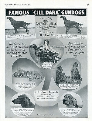 Irish Setter Our Dogs 1951 Dog Breed Kennel Advert Print Page Cill Dara Kennel
