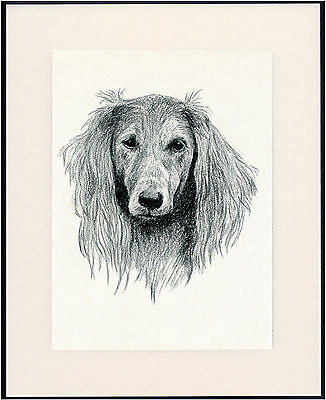 Saluki Old Dog Head Study Print From 1935 Mounted Ready To Frame