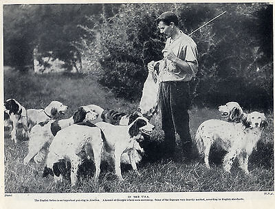 English Setter American Dogs At Georgia Kennels Original 1934 Dog Print Page
