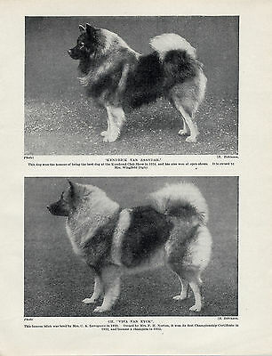 Keeshond Two Named Winning Dogs Old Original Dog Print From 1934