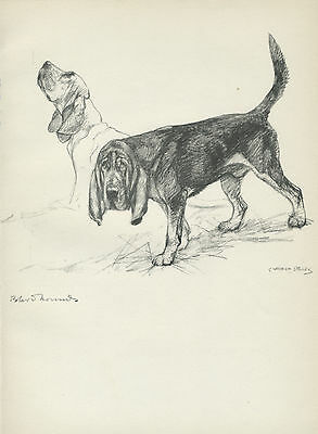 BLOODHOUND DOGS LOVELY OLD 1938 DOG ART PRINT by VERNON STOKES