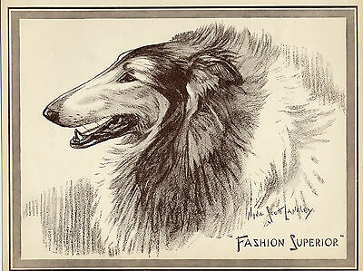 Rough Collie Lovely Head Study By Scott Langley Original 1934 Dog Print Page