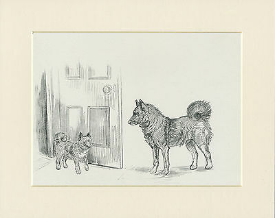 Norwegian Elkhound Dog And Pup Old 1930'S Kf Barker Sketch Print Ready Mounted