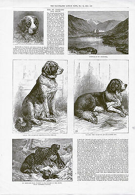 The Saint Bernard Dog Show Rare Antique Print Page Dated 1883