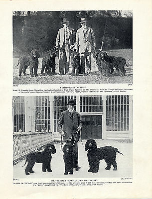 Irish Water Spaniel Named Champion Dogs And Owners Old Original 1930'S Dog Print