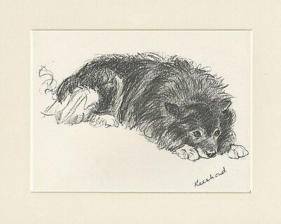 Keeshond Lovely 1930'S Mac Lucy Dawson Dog Sketch Print Ready Mounted