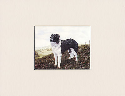 Border Collie Lovely Little Bookplate Dog Print Ready Mounted