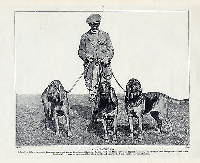 Bloodhound Gentleman And His Dogs Lovely Original Dog Print Page From 1934