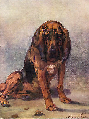Bloodhound Lovely Original Dog Colour Art Print Page From 1934 By Maud Earl