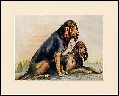 Bloodhound Two Seated Dogs Lovely Dog Print Mounted Ready To Frame