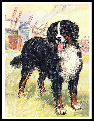 Bernese Mountain Dog Lovely Vintage Style Dog Art Print Poster