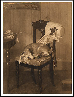 Italian Greyhound On A Chair Charming Vintage Style Image Dog Art Print Poster