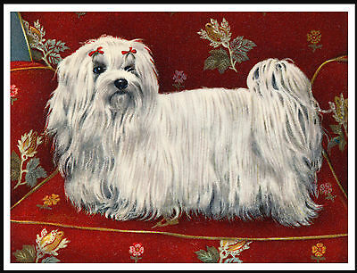 Maltese Little Dog In A Red Chair Charming Vintage Style Dog Art Print Poster