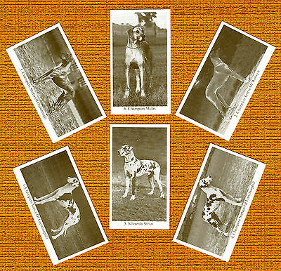 GREAT DANE  Named Set Of 6 Dog Photo Trade Cards