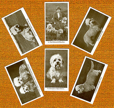 DANDIE DINMONT TERRIER Set 2 Named Dog Photo Trade Cards