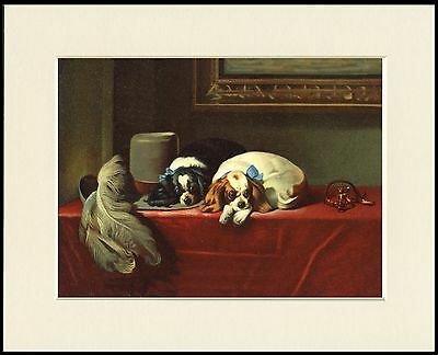 Cavalier King Charles Spaniel Dogs Lovely Mounted Dog Print Ready To Frame
