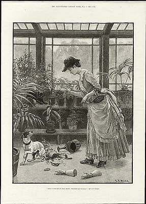 Illustrated London News Antique Print Engraving Lady Fox Terrier Damaged Plants