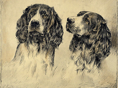 WELSH SPRINGER SPANIEL TWO DOGS GREAT DOG  BIRTHDAY GREETINGS NOTE CARD