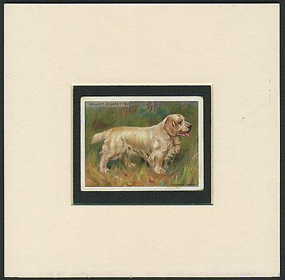 Clumber Spaniel Antique 1914 Issue Collectable Dog Cigarette Card Ready Mounted