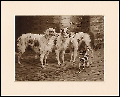Borzoi Dogs And Terrier Lovely Sepia Dog Art Print Mounted Ready To Frame