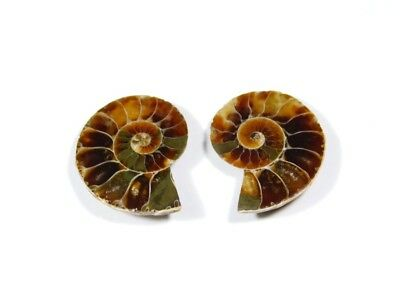 New Arrival Natural Ammonite Fossilized Shell Matched Pair Smooth Polish DB=24