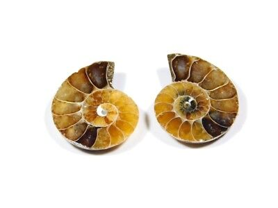 New Arrival Natural Ammonite Fossilized Shell Matched Pair Smooth Polish DB=67