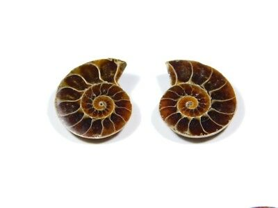 New Arrival Natural Ammonite Fossilized Shell Matched Pair Smooth Polish DB=49