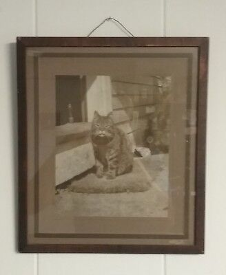 Antique Rare Large Cat Cabinet Photo - Signed Photographer + Origin Frame