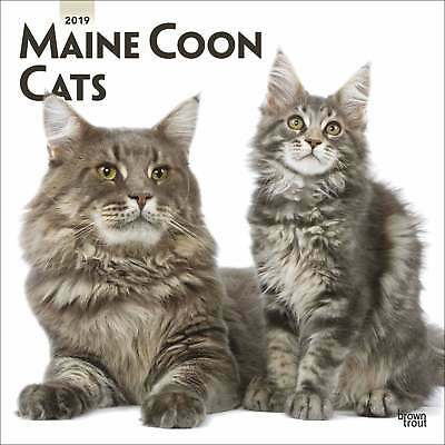 Maine Coon Cats Calendar 2019 Cats Month To View