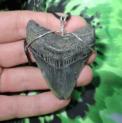 Nice 2 3/8'' Megalodon Sharks Tooth Necklace Sharks Teeth Jewelry