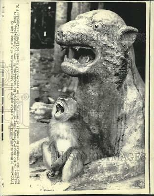 1971 Press Photo Sprite Monkey copies expression of stone lion at Monkey Forest