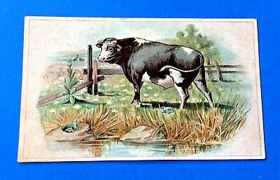 "Lion Coffee ""Frog and The Bull"" Trade Card Woolson Spice Co. Toledo, Ohio"