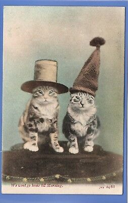 Old Vintage 1905 Postcard Two Cute Fluffy Cats Kittens Wearing Hats Animals