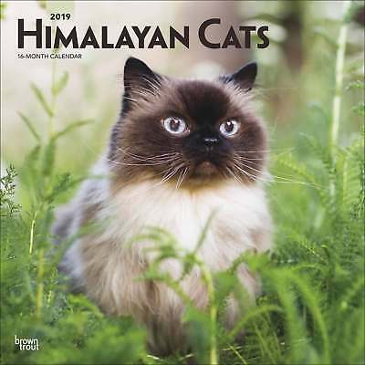 Himalayan Cats Calendar 2019 Cats Month To View