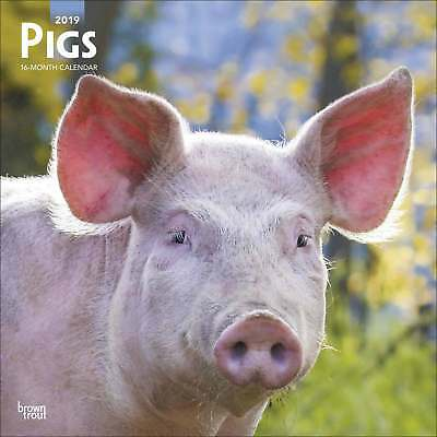 Pigs Calendar 2019 Animals Month To View