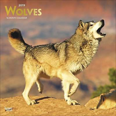 Wolves Calendar 2019 Animals Month To View