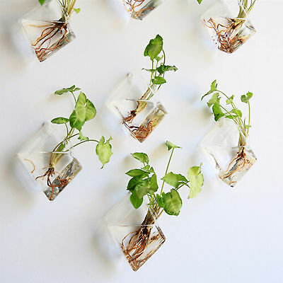 Newly Natural Wall Hanging Plant Terrarium Glass Planter Diamond Baskets Pots