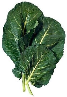 1500 MORRIS HEADING COLLARDS Collard Green Brassica Oleracea Vegetable Seeds